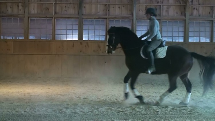 Bitless Dressage