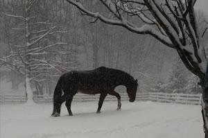 ohana farm winter