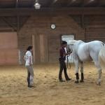 Shoulder suppling Prix St. George horse
