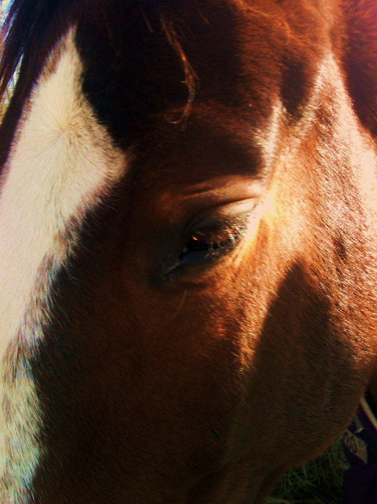 Farah DeJohnette Horsemanship