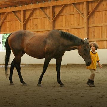 share-a-horse-sq