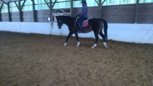 Thoroughbred for adoption