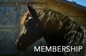 membership-V2