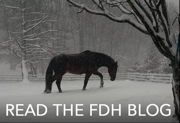 read-the-fdh-blog