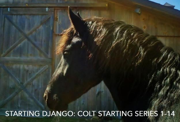 starting-django