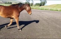 Movement and Posture