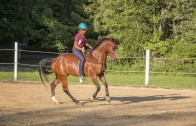 FDWH Level 1 Liberty, Ground, Articulate Riding 3 day clinic June 1-3 Newport, NH