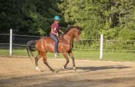 Farah DeJohnette Horsemanship demo Sept 22nd, Doylestown, PA
