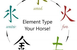 Element type your horse quiz!